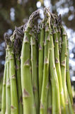 Asparagus Bunch Royalty Free Stock Images