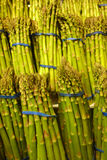 Asparagus Stock Photography
