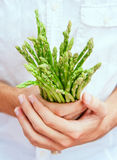 Asparagus in chef's hands Royalty Free Stock Photo