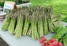 Asparagus at farmers market. Organic asparagus for sale at outdoor farmers market Royalty Free Stock Photo
