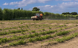Asparagus farming and crop spraying Royalty Free Stock Images