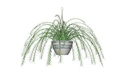 Asparagus fern drawing. Three dimensional illustration of a hanging asparagus fern against a white background Stock Images