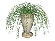 Asparagus fern illustration. Illustration of an asparagus fern in a ceramic urn.  Isolated against a white background Stock Photography