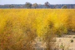 Asparagus Field, Beelitz Stock Photo