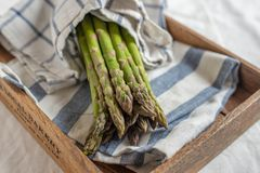 Asparagus. Fresh Asparagus. Green Asparagus. Bunches of green asparagus stock images