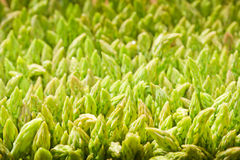 Asparagus. Stock Photos