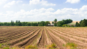 Asparagus  for harvesting Stock Photo