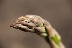 Asparagus.JH Image stock