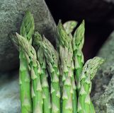 Asparagus.JH. Asparagus laying on a limestone.JH royalty free stock photography