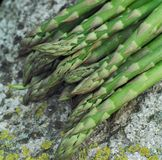 Asparagus.jh Fotos de Stock Royalty Free