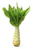 Asparagus Lettuce Royalty Free Stock Photo