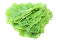 Asparagus Lettuce Royalty Free Stock Images