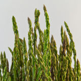 Asparagus in a metal pot Royalty Free Stock Images