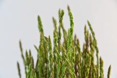 Asparagus in a metal pot Stock Photo
