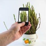 Asparagus in a metal pot Stock Photos