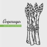 asparagus odizolowywający Fotografia Royalty Free