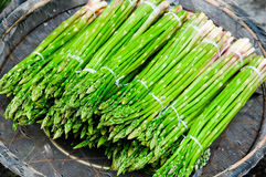 Asparagus officinalis Stock Image
