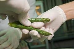 asparagus preparatu Fotografia Stock