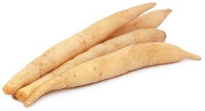 Asparagus racemosus Royalty Free Stock Image
