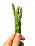 Asparagus spears in hand. Hand holding three asparagus spears royalty free stock photo