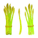 Asparagus spears tied in a bunch Stock Photo