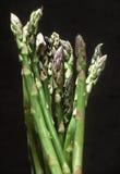 Asparagus Stalks. Spotlighted Asparagus royalty free stock image