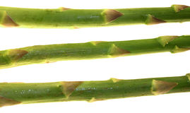 Asparagus Stalks. Three stalks of asparagus. Isolated on white Stock Photo