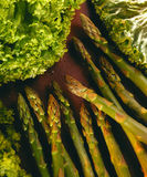 Asparagus Tips Royalty Free Stock Images