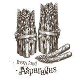 Asparagus vector logo design template. fresh Stock Photo