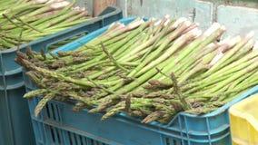 Asparagus stock footage