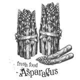 Asparagus on a white background. sketch Stock Photos