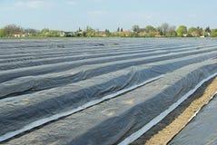 Asparagusa pole 06 Zdjęcia Stock