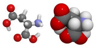 Aspartic syrlig (Asp, D) molekyl Royaltyfria Bilder