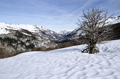 Aspe Valley in winter seen from Somport pass in Pyrenees. Aspe Valley in French Atlantic Pyrenees seen in winter from Col  Somport pass. The snow pattern and the Royalty Free Stock Photo