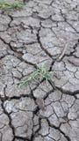 Aspect de sécheresse sur terre avec des peu herbe images stock