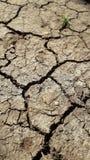 Aspect de sécheresse sur terre photographie stock