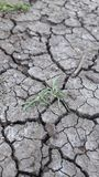 Aspect of drought on earth with few herb stock images