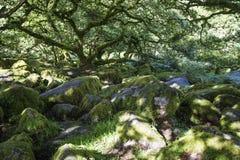 Aspecten van het Hout van Wistman ` s - een oud landschap op Dartmoor, Devon, Engeland stock afbeelding