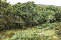 Aspecten van het Hout van Wistman ` s - een oud landschap op Dartmoor, Devon, Engeland royalty-vrije stock foto