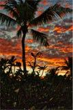 Aspecto tropical do retrato do nascer do sol Imagens de Stock Royalty Free