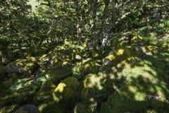 Aspects de bois du ` s de Wistman - un paysage antique sur Dartmoor, Devon, Angleterre images stock