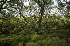 Aspects de bois du ` s de Wistman - un paysage antique sur Dartmoor, Devon, Angleterre photos libres de droits