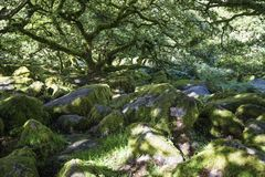 Aspects of Wistman`s Wood - an ancient landscape on Dartmoor, Devon, England. Wistman`s Woof is one of the last vestiges of ancient forest in England. It lies in stock image