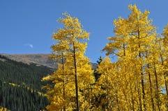 Aspen και βουνά Στοκ φωτογραφίες με δικαίωμα ελεύθερης χρήσης