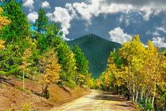 Aspen и выровнянная сосной грязная улица горы стоковое изображение