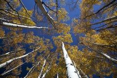 Aspen Foto de Stock Royalty Free