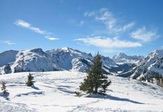 Aspen Foto de Stock