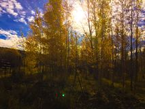 Aspen Afternoon foto de stock royalty free