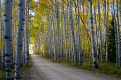 Aspen Alley Stock Photos