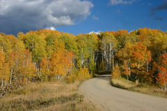 Aspen Alley From Back Royalty Free Stock Image